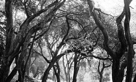 A Tree Grows in Berkeley